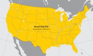 Map of the United States showing approximate distribution of the Brown dog tick. The entire United States is affected.