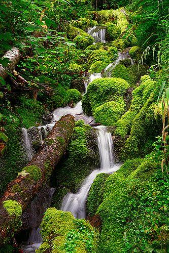 Moss covered rocks, Japan
