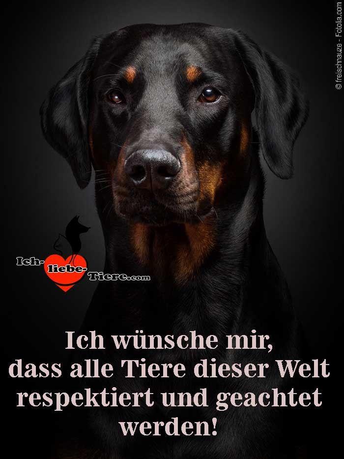 Ich wünsche mir, dass alle Tiere dieser Welt respektiert und geachtet werden!