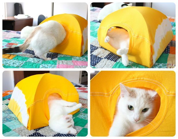 Cat Tent-wire coat hangers, a piece if cardboard, a t-shirt and five minutes.