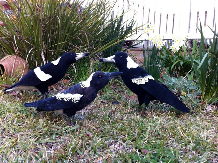 Australian Magpie Family by Catherine Stein skittykitty.com