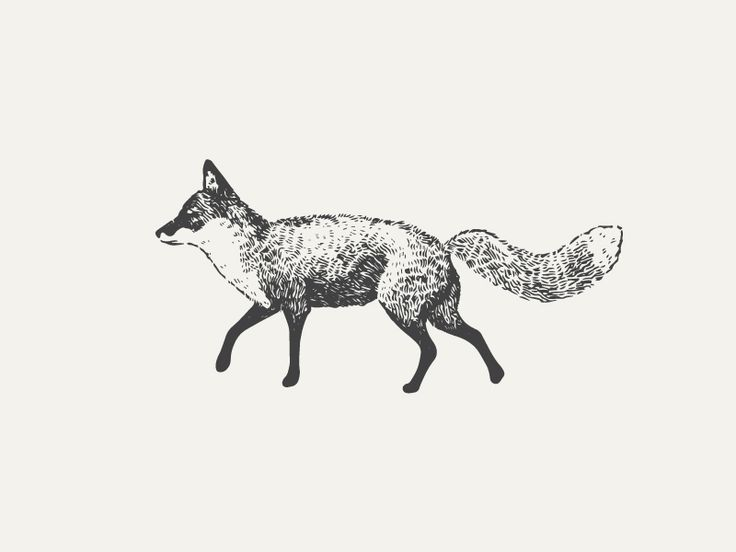 Fox by Nudge via Dribble