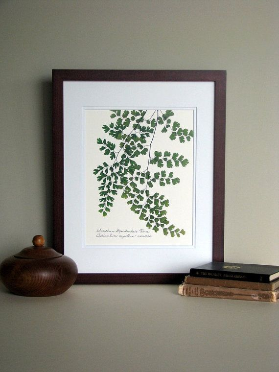 This etsy shop has a series of botanical prints - you should take a look.   4 prints would look good on your wall.   Pressed fern art print 11x14 double matted by FlatFlowerDesigns, $26.00