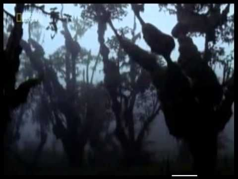 The Lost Film of Dian Fossey DOCUMENTARY (2002) She studied mountain gorillas for 18 years.