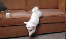 scat mat indoor pet barrier
