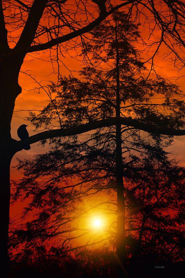 Solitary bird watching the sun go down.