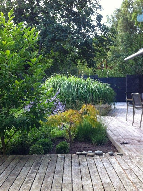 Purple Area: Min trädgård mellan skurarna