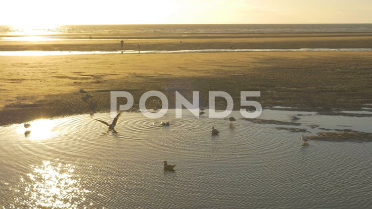 Seagulls In Pool Of Water On Sandy Beach Sunset - Stock Footage | by RyanJonesFilms