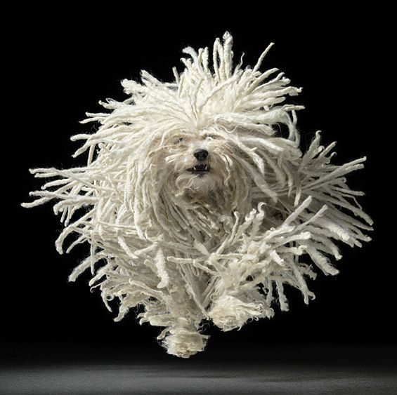 dog portraits by tim flach