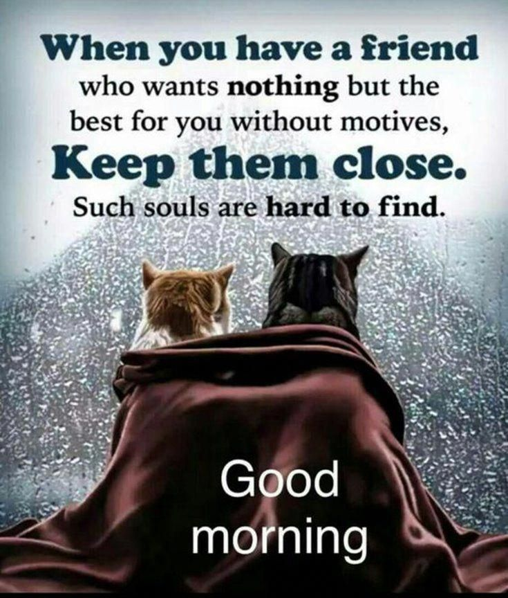 60 Of The Good Morning Quotes For You 60 DogAnxietyEssentialOils Unique Morni To True Love Sunshine