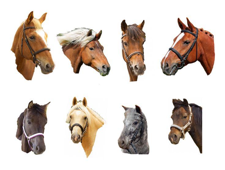 Våra hästar | Stall Långvik