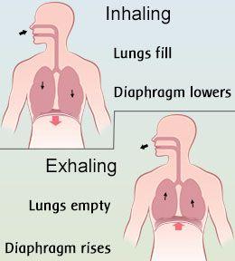 Explanation of diaphragmatic breathing