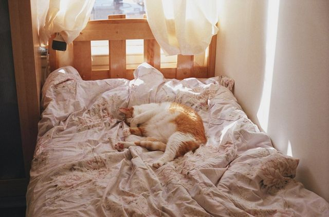 : Cat Beds, Sleepy Cat, Cozy Corner, Kitty Beds, Fat Cat, In Memories, Chih Chen, Ginger Cat, Saturday Mornings
