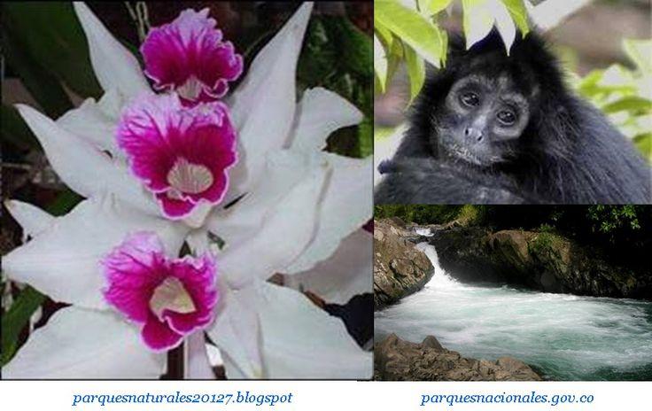 Para los amantes de la naturaleza y las flores, el Parque Nacional Natural de Las Orquídeas es uno de los lugares turísticos más importantes de Colombia….