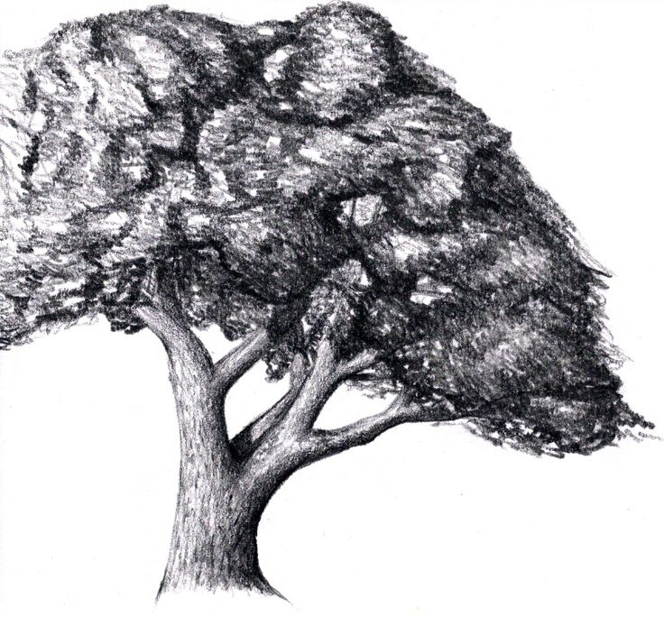 Tree Drawings 87 best drawing trees images on pinterest | drawing trees, tree