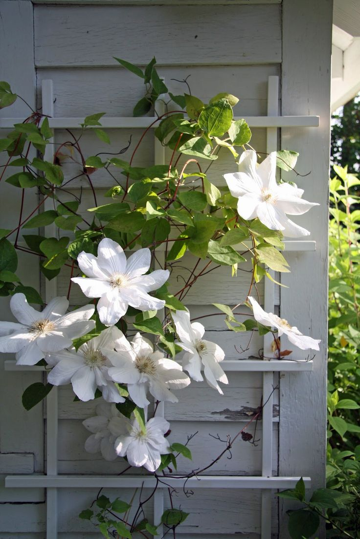 Clematis via A Country Farmhouse