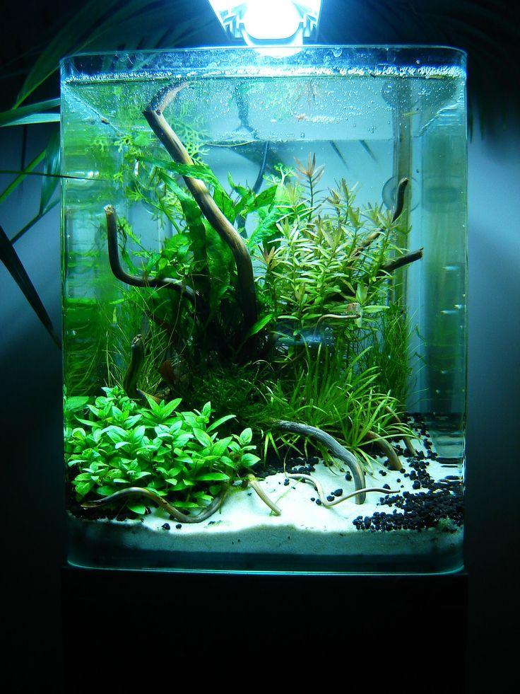 Layout by phanou aquascaping a fishy idea for the wet - Petit aquarium design ...