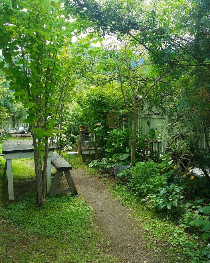 """3,287 Likes, 38 Comments - @sho.candy on Instagram: """". . 華やかさのないグリーンだけのお庭ですが、 こんな素朴な雰囲気の庭が好きです♪ . .…"""""""