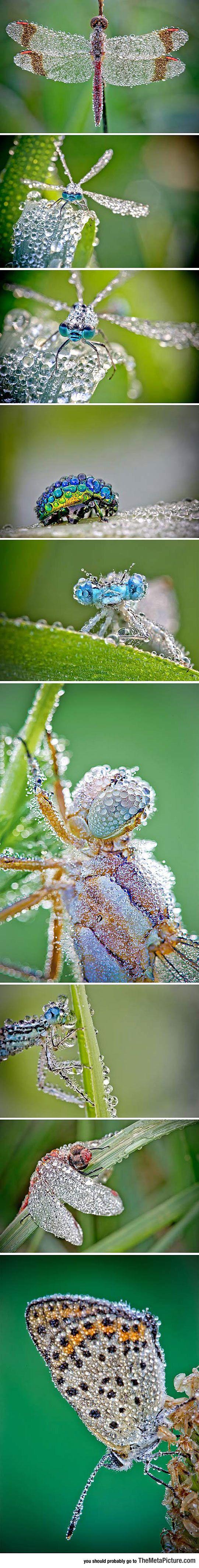 Insectos bajo la lluvia