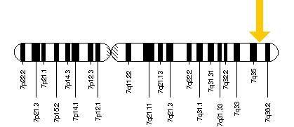 The SHH gene, Sonic the Hedgehog gene, no joke, it's crazy