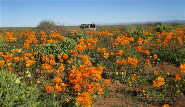 Flower Season at Tankwa Karoo National Park, South Africa www.sanparks.org