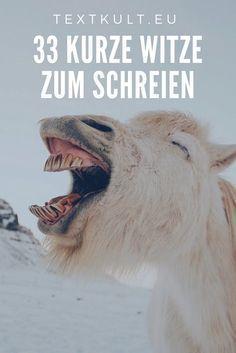 33 geniale Flachwitze ᐅ Diese Witze sorgen für einen Lacher! – Franziska Hagn