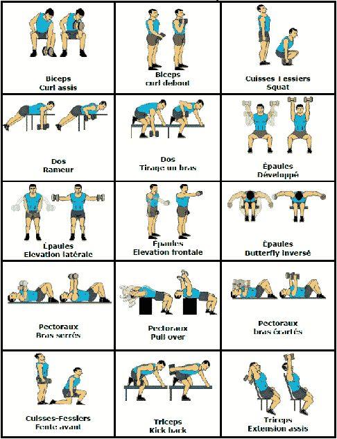Téléchargez vite notre programme gratuit d'exercices avec Haltères pour vous muscler facilement chez vou