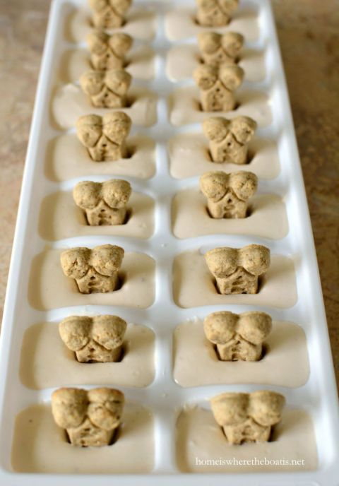 """Easy Ice Dream DIY Dog Treats: These frozen goodies come from the copy-cat recipe for a certain brand of dog """"ice cream."""" Be sure your yogurt base contains no artificial sweeteners, which can be harmful to dogs. Click through for 10 more yummy homemade dog treats ideas and recipes."""