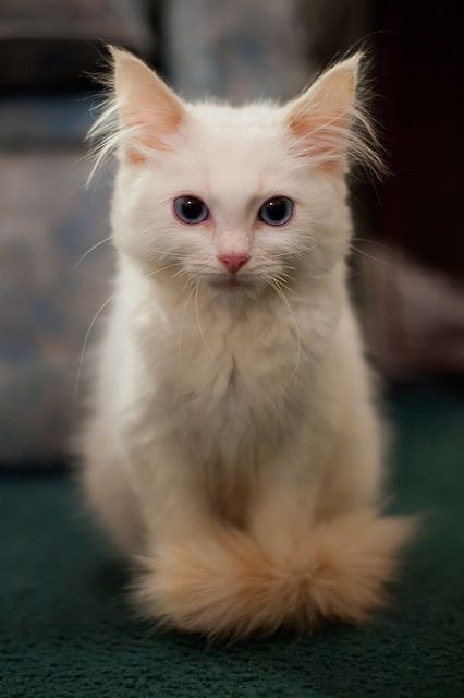 Click the Photo For More Adorable and Cute Cat Videos and Photos #cutecats #cats… – Katzen♥️