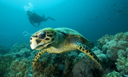 Scuba-Certification Course and Catalina Island Weekend Getaway for One or Two from PCH Scuba (58% Off)