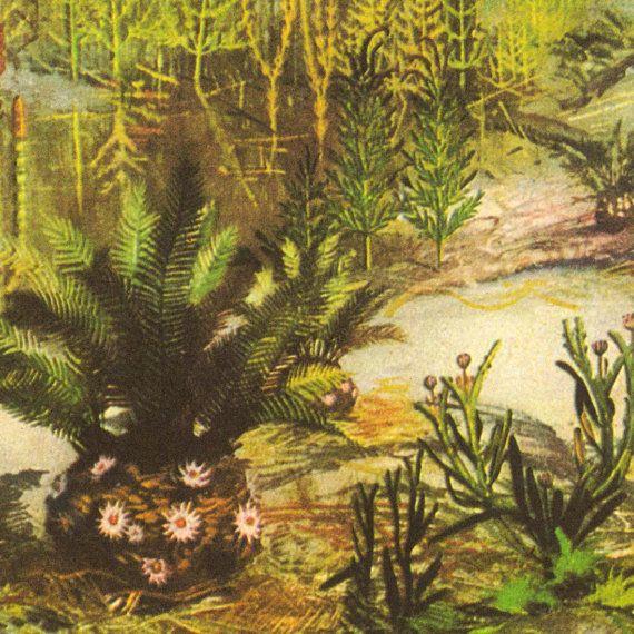 этот жил картинки растений триасового периода парк также