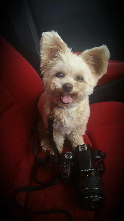 Photography assistant at the ready!
