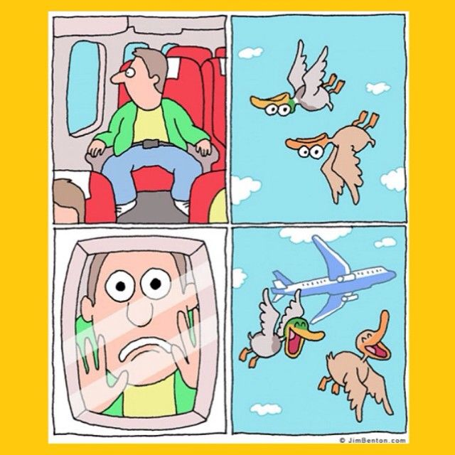 Fottute papere. #tmlplanet #troll #aereo #volo