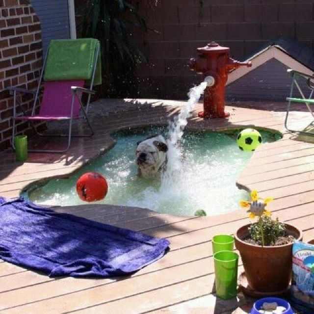 I love this Dog Pool built in to the porch but Bella definitely needs the hydrant water feature for the hose!!