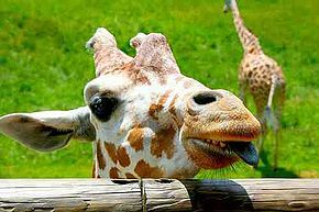 Check out Binder Park Zoo Coupons and Free Offers to save on your next visit. http://www.bestfreestuffguide.com/Free_Binder_Park_Zoo_Coupons