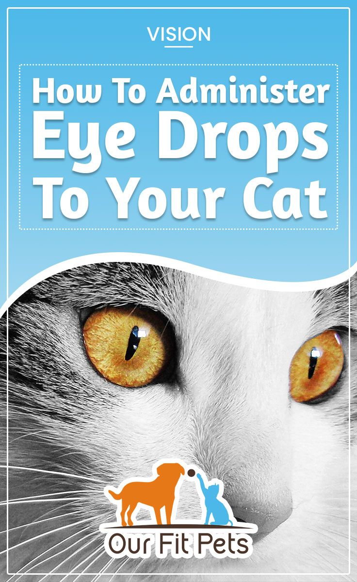 How To Administer Eye Drops To Your Cat Our Fit Pets Cat Eye Infection Eyes Problems Cat Advice