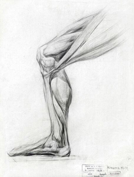 Анатомия                                                                                                                                                                                 Más
