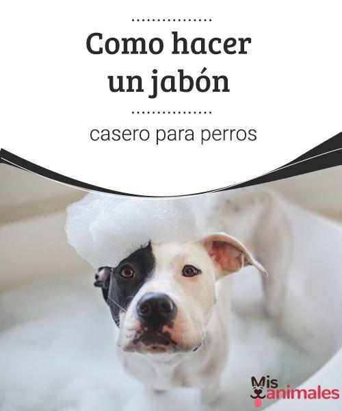 Cómo hacer jabón casero para perros  Una parte importante del cuidado canino es el baño. Sin embargo, los productos para perros son caros. Aquí te enseñamos a hacer jabón casero para perros.