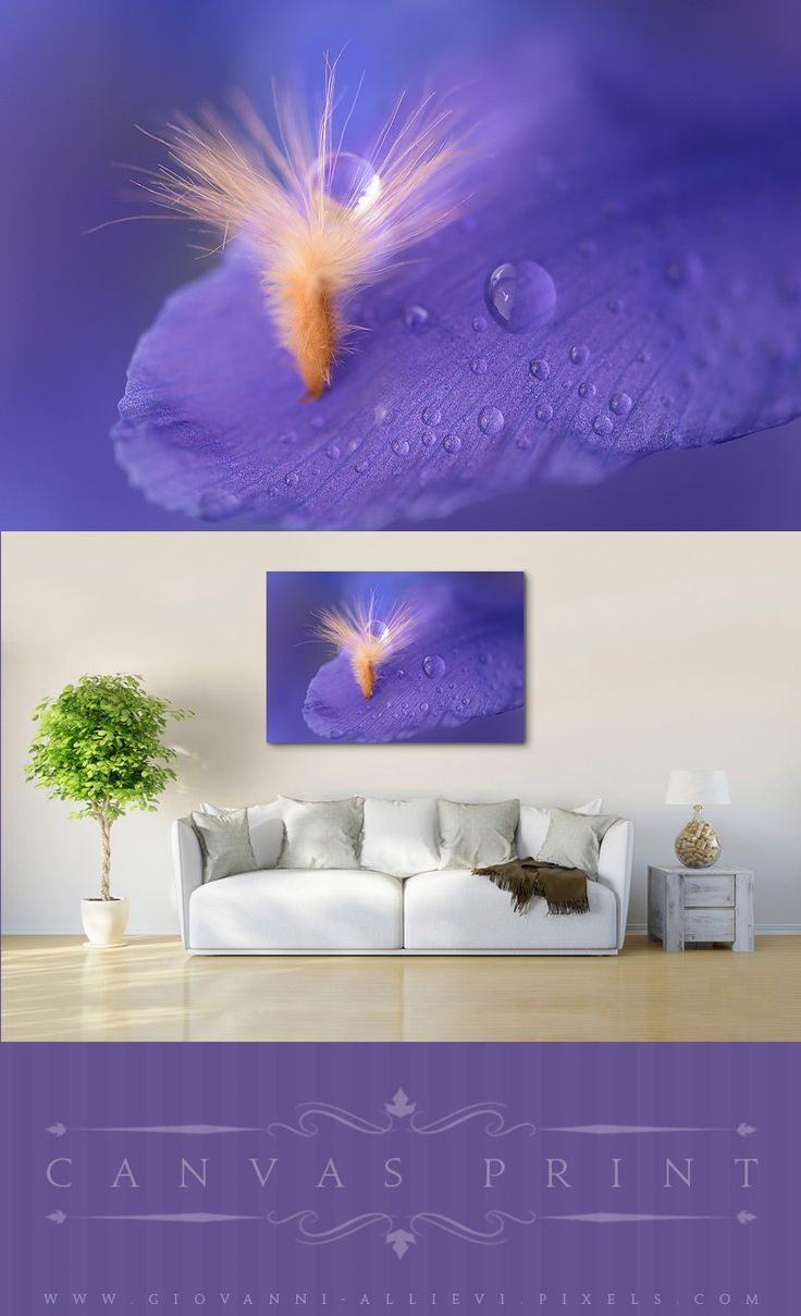 best wall decor tiny world macro photography canvas prints