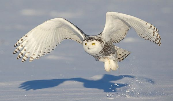 Great Real Owl Pictures to Admire (37)