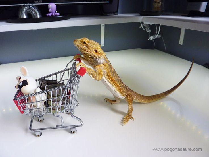 Pogona supermarché