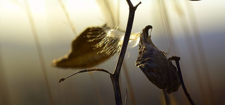 Zelovits Gábor  A Vénhegyi decemberi fény (részlet) Átfest mindent, teret, fát, virágot, s nemes egyszerű lelket oly sejtelmessé teszi a látványt, mit a természet elénk tár és semmit sem kell tennünk, mint látnunk, észlelnünk szemünket a fényre vetnünk, s áldani e jótékony fényt mi így decemberben lágyan festőien, színházat vetít szinte ingyen mindenki elé. Több kép Gábortól: www.facebook.com/gzelovits