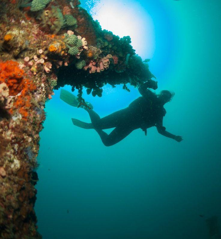 Scuba diving in Anilao, Philippines  http://www.rafiquaisraelexpress.com/scuba-diving-in-the-philippines/