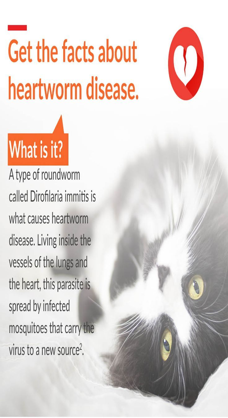 Heartworm Medicine Without A Vet Heartworm Disease Heartworm Cat Health Signs