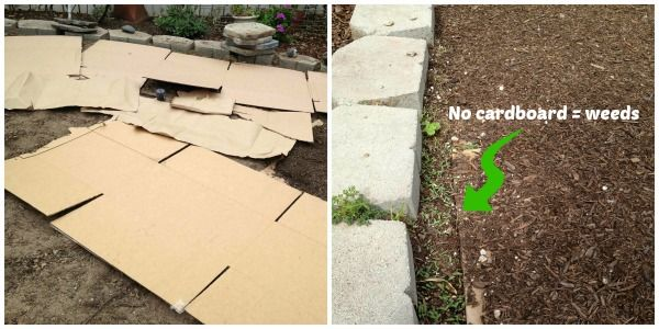 Using cardboard as mulch to kill out grass & weeds  Margaret Roach