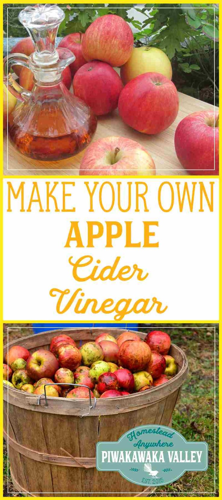 Apple cider vinegar is all the rage in the natural health sector. To buy it with the 'mother' still in it, in ACV's raw state you pay through the nose for it. Did you know you can Make Your Own Apple Cider Vinegar #naturalhealth #makeyourown #acv