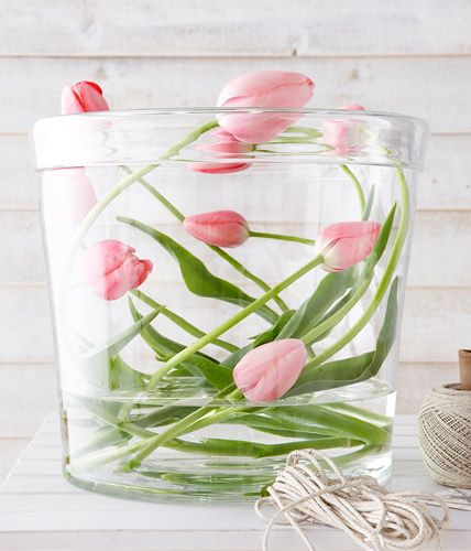 Tulips decoration in Glass - This is certainly not to present the classical method, cut flowers in the vase. But to lie a little bit cross has its visual appeal. These turn the brittle stems carefully