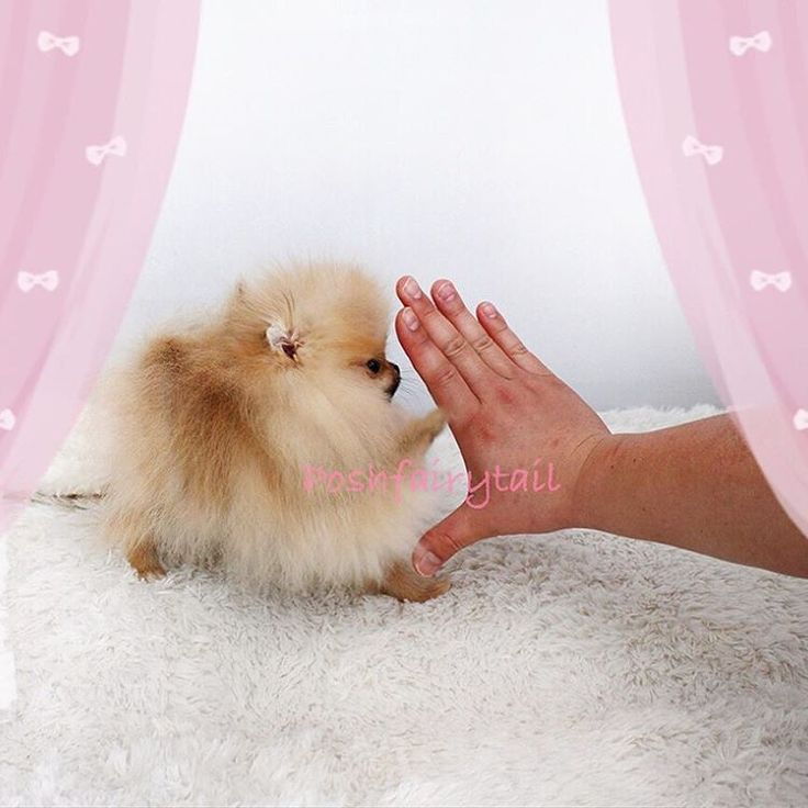 Doing high five with your little four legged princess...
