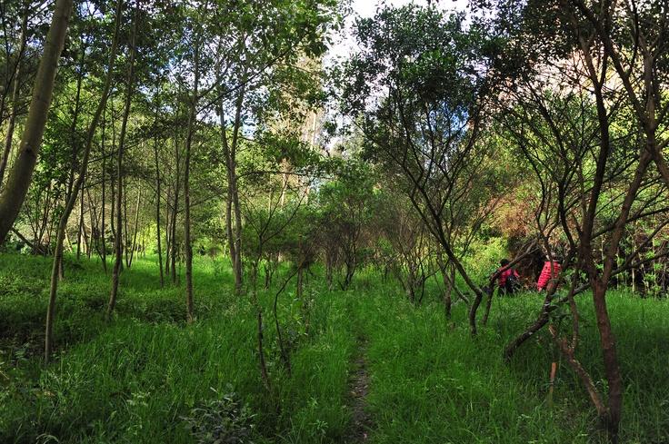 El Río Bogotá necesita más árboles para frenar su contaminación. #AdoptaUnArbol