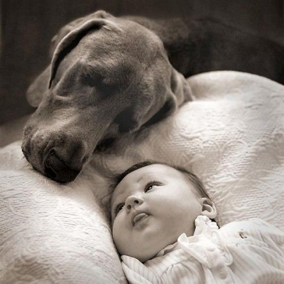 The guard dog...